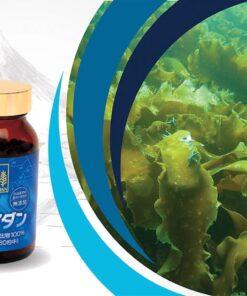 Okinawa Fucoidan Kanehide Bio 180 Viên – Phòng ngừa và hỗ trợ điều trị ung thư hiệu quả