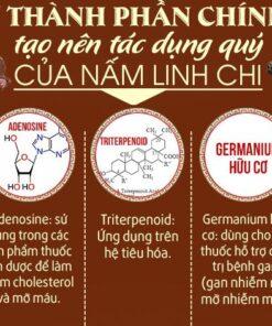 uống nấm linh chi có tác dụng gì